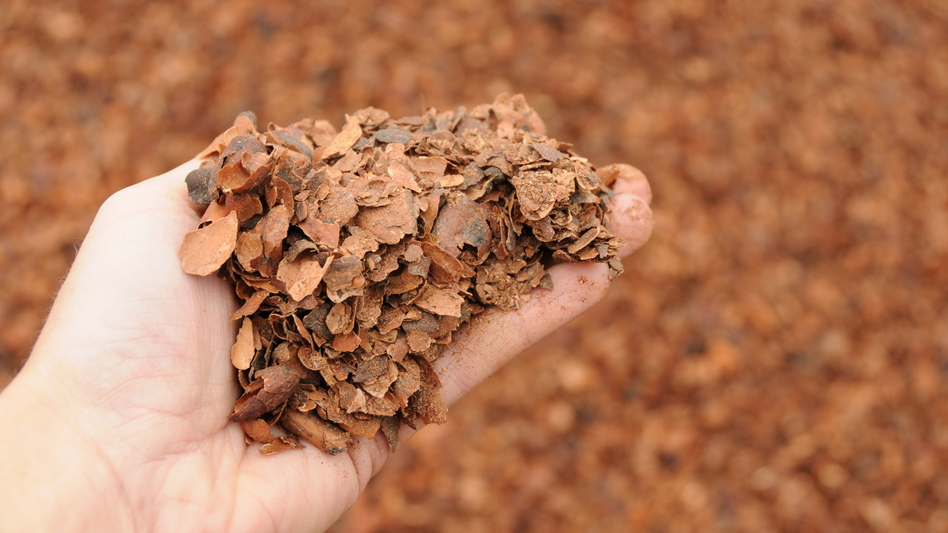 Cocoa shells from a Hershey's chocolate plant in Hershey, Pa., are just one ingredient in the compost that mushroom growers use to feed the fungi. (NPR)