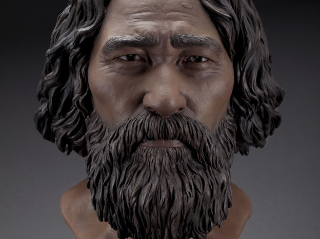 Forensic artists think this is what Kennewick Man looked like. (Courtesy of Doug Owsley )