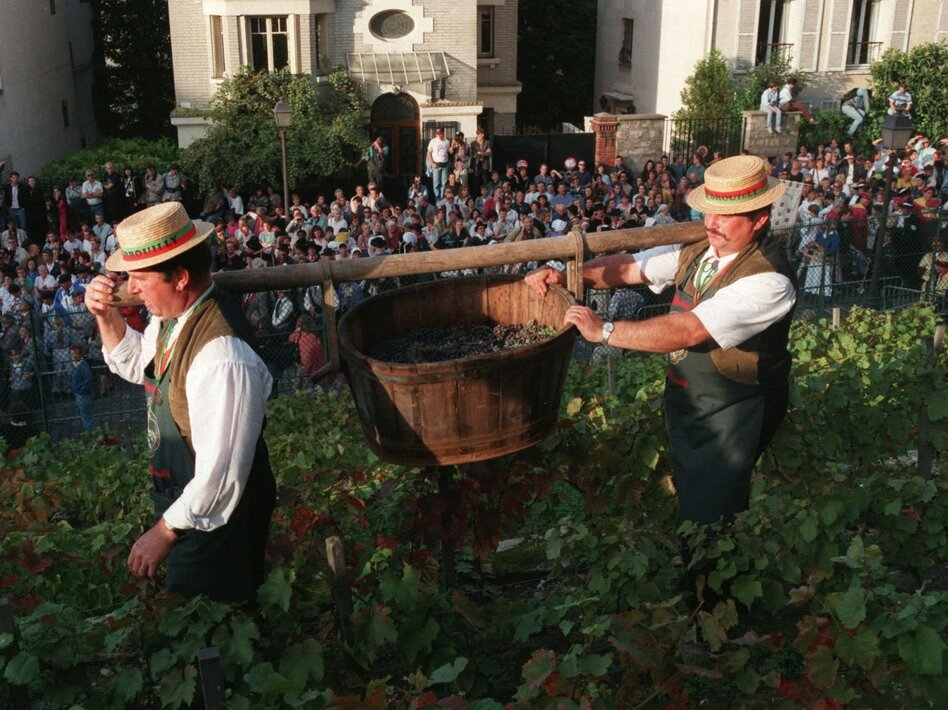 Crowds watch as Clos Montmartre's grapes are harvested during its annual October wine festival. (Jacque Brinon/AP)