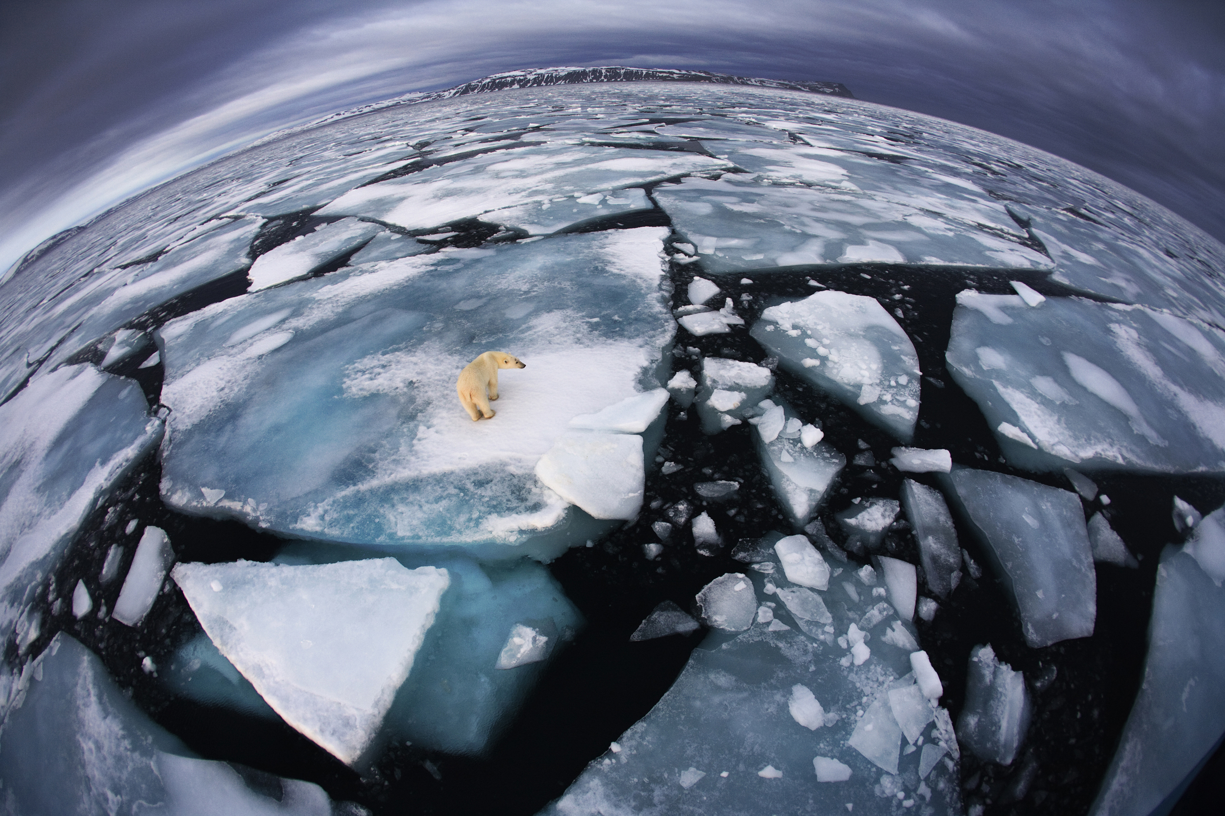 "Winner, The World In Our Hands Award -- The photographer was on a boat in Svalbard, an archipelago midway between mainland Norway and the North Pole, when she saw this polar bear at around 4 in the morning. She used a fish-eye lens to make the enormous animal appear diminutive and create an impression of ""the top predator on top of the planet, with its ice world breaking up."""