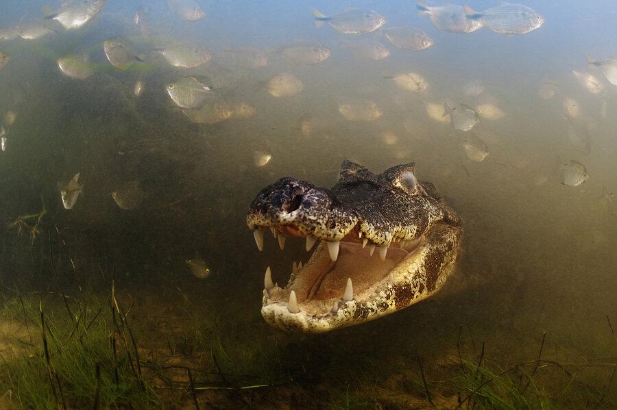 Stunning Examples Of Award Winning Wildlife Photography ...