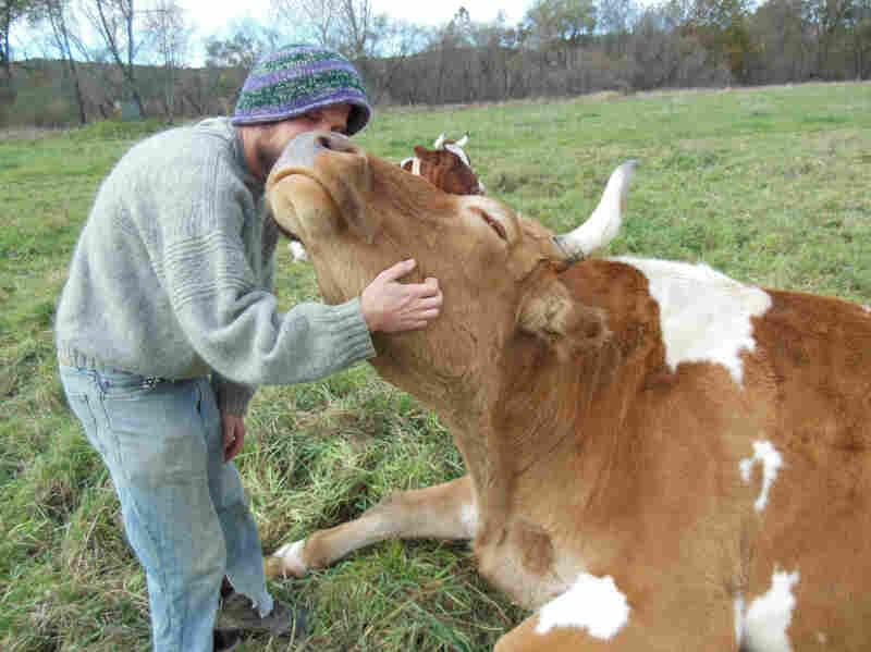 Bill enjoys a scratch from graduate farm worker Ben Dube.