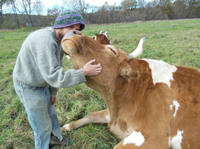 Bill enjoys a scratch from graduate farm worker Ben Dube.