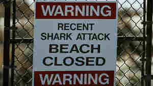 After Shark Kills Surfer, Central California Beach Closed