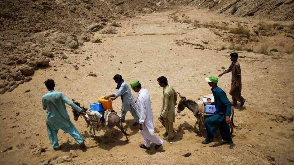 Health workers transport the polio vaccine by donkey in southeastern Pakista