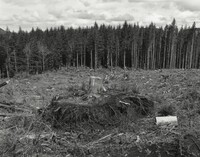 """More than 90 percent of the original forest in the American Northwest has been clear-cut at least once,"" writes Robert Adams. Clatsop County, Ore."