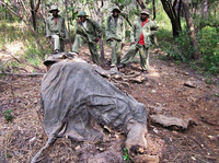Wildlife rangers in Tanzania came across this elephant that had been killed for its ivory. Tanzania says it wants to prevent the slaughter of elephants, but rangers are poorly paid and are responsible for monitoring vast game reserves in the East African country.