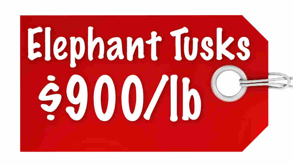 Elephant Tusks $900/lb
