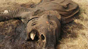 Poaching is rife in Tanzania game reserves. This elephant was killed, and its tusks taken, at the Lake Chala Safari Camp, a small, private reserve near Mount Kilimanjaro in northern Tanzania.