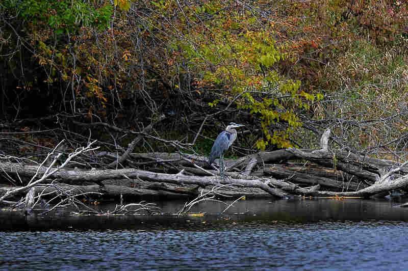 """The Bark winds through southeastern Wisconsin's """"Kettle Moraine"""" — small hills called drumlins and deep glacial lakes known as kettles. It's part of the Mississippi watershed."""