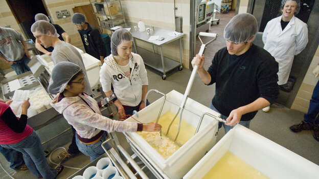 Oregon State University food science and technology students mix a batch of havarti cheese in a cheesemaking class.