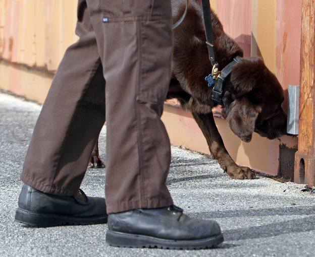 Miami-Dade narcotics detector canine Franky, who came out of retirement to give a demonstration, sniffs marijuana in Miami in 2011. Franky's supersensitive nose is at the heart of a question being put to the U.S. Supreme Court: Does a police K-9's sniff outside a house give officers the right to get a search warrant for illegal drugs?