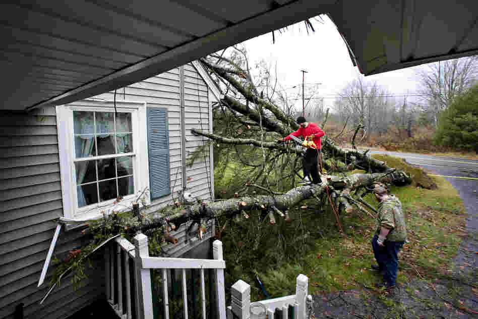 Phil Potvin climbs into position to cut a white pine after the tree toppled onto his father's home during Sandy in Scarborough, Maine.