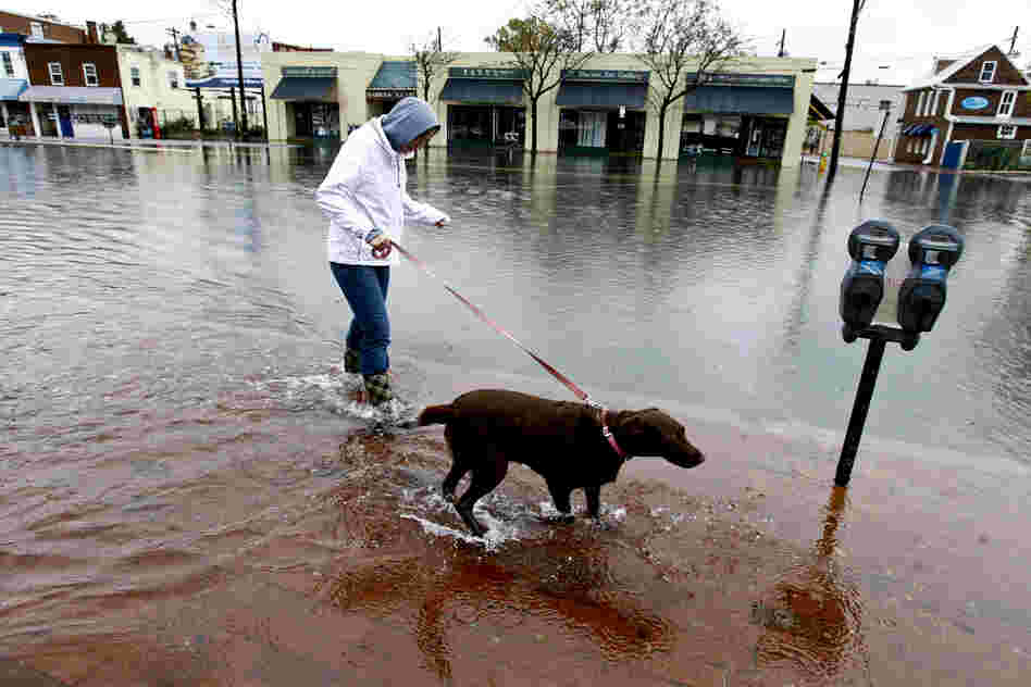 Lauren Sinnott walks her dog, Becca, in a flooded street in downtown Annapolis, Md.