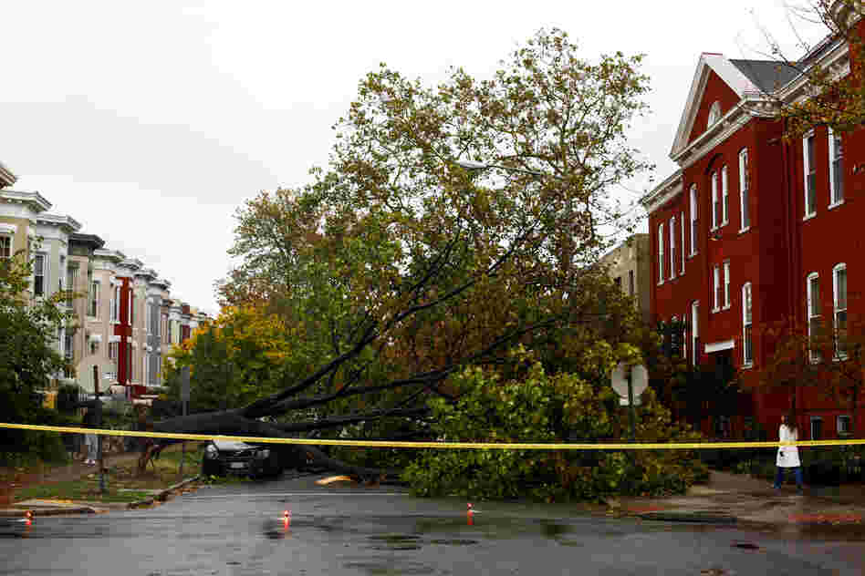 A fallen tree damaged a car and blocks a street on Capitol Hill in Washington, on Tuesday. Washington escaped significant damage from Sandy, but tens of thousands of residents experienced power outages.