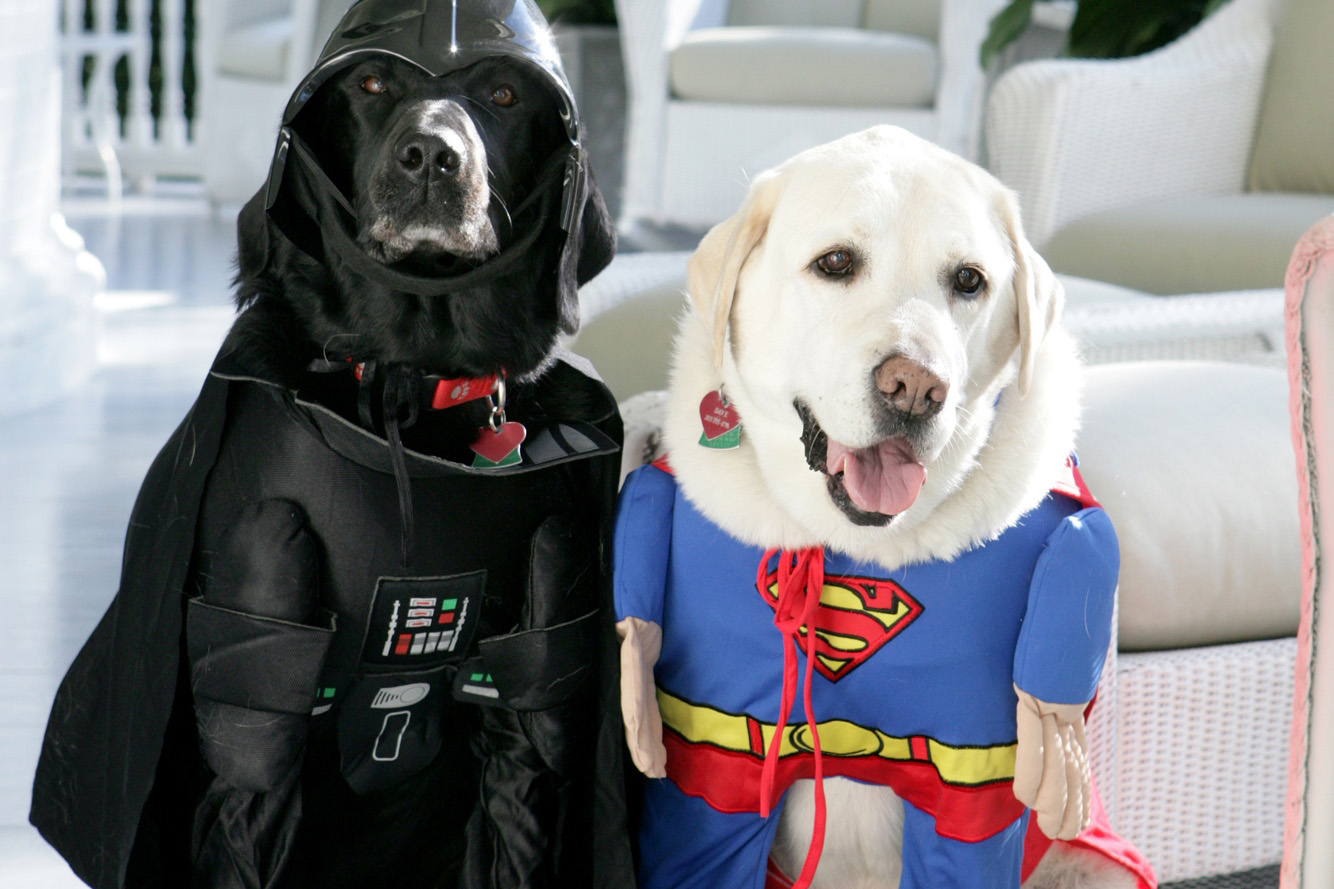 I mean, if Dick Cheney's dogs can do it, so can you. (Jackson, i.e. Darth  Vader, and Dave, i.e. Superman, at the Vice President's residence in 2007.