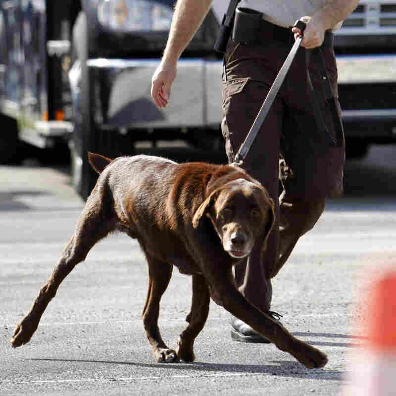 Drug-Sniffing Dogs Take Center Stage At High Court