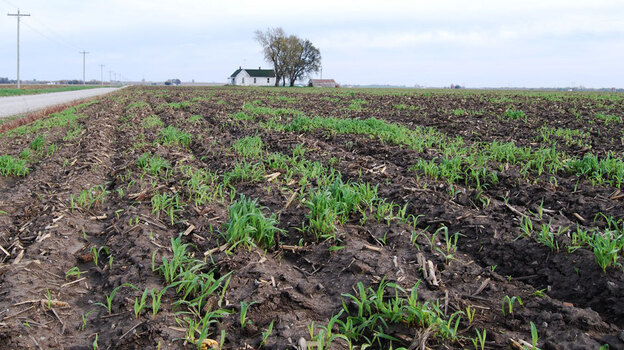 This field is part of a 160-acre tract in Saline County, Mo., that sold for $10,700 per acre in February — double what it would have gone for five years ago. (Harvest Public Media)