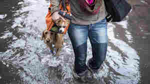 Blaine Badick walks through floodwaters with her dogs in Hoboken, N.J., on Wednesday.