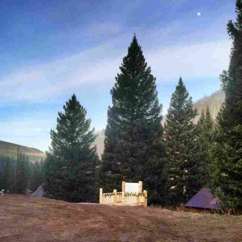 Nation's Christmas Tree Plucked From Colorado