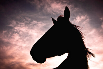 How 'Black Beauty' Changed The Way We See Horses : NPR