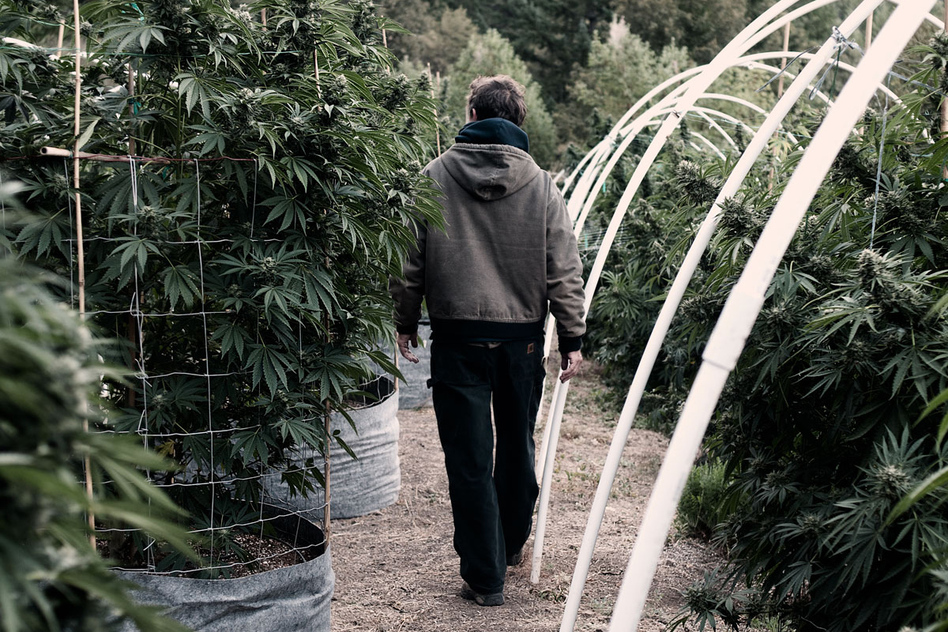 """Grassland"" is a series that peeks behind the curtain of pot production in California. (H. Lee)"