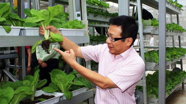 Mah Bow Tan, a member of Singapore's Parliament, inspects Chinese cabbage growing at the commercial vertical farm. Troughs of the veggies stack up to 30 feet in the greenhouse. (Courtesy of MNDsingapore.)