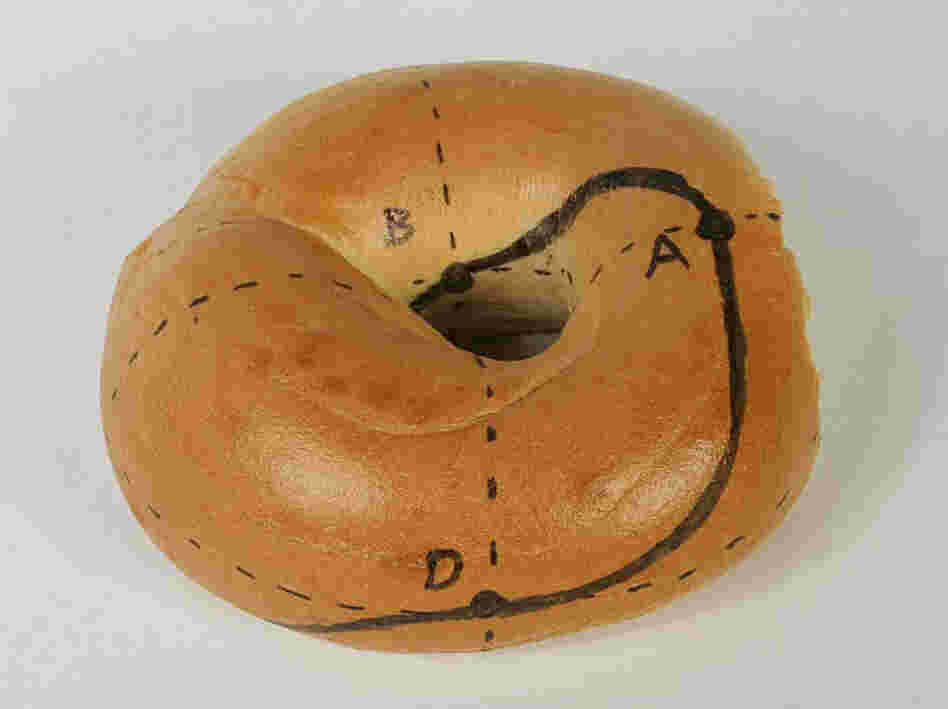 A guide to making a Mobius bagel. Cut along the black line.