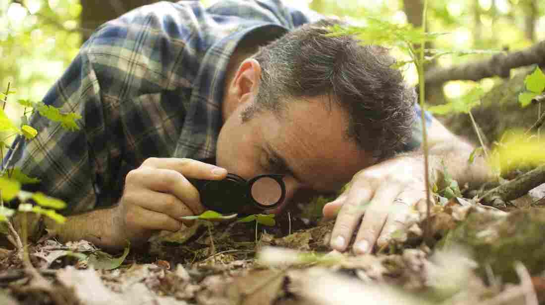 David Haskell at work
