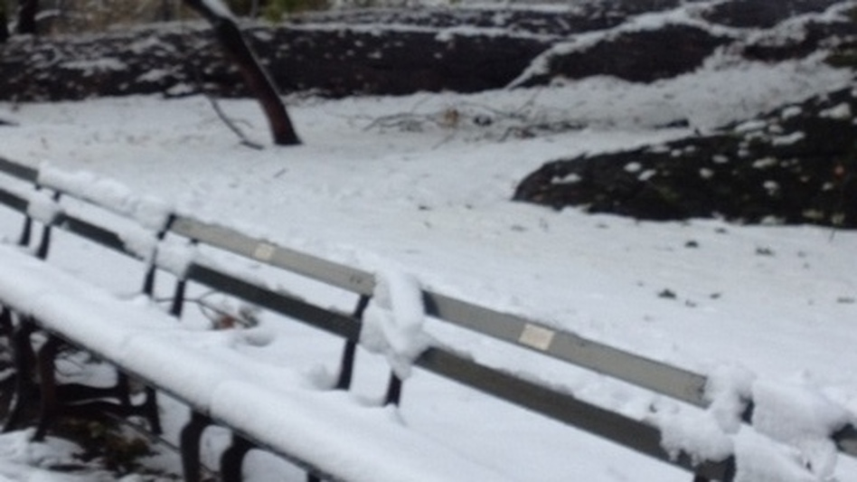 The snow this morning in Manhattan's Central Park, where several inches fell. (NPR)
