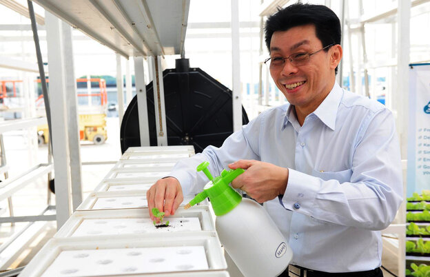 Senior Minister of State Lee Yi Shyan transplants some leafy green seedlings at the grand opening of Singapore's first commercial vertical farm.