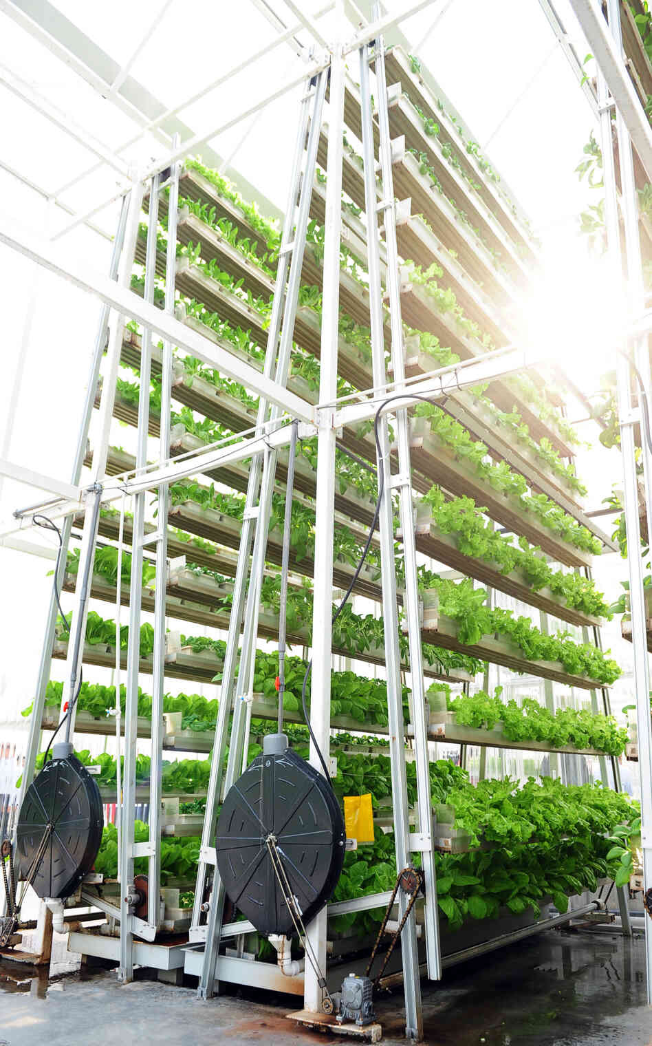 Sky High Vegetables Vertical Farming Sprouts In Singapore