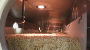 In one of the first steps of cheese-making, curds move through this tunnel on a slow-moving belt, separating them from the liquid whey.