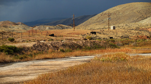 More than 40 years ago, the EPA banned oil companies from releasing wastewater into the environment, but made an exception for the arid West. If livestock and wildlife can use the water, companies can release it. Cows like these grazing near a stream of waste on the Wind River Reservation in Wyoming are supposedly the reason the EPA lets oil companies release their waste into the environment.