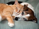 Cat and dog snuggling.