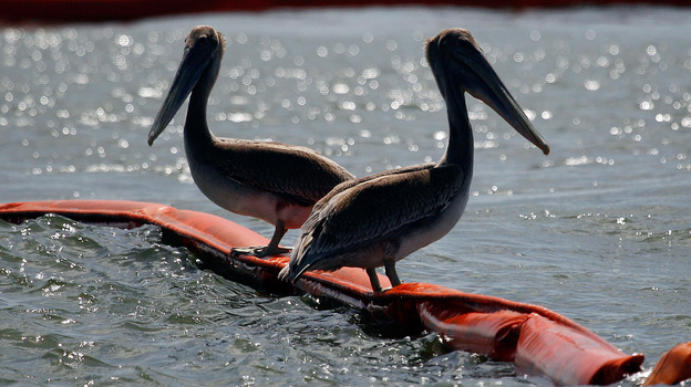 July 2010: Two pelicans sit on booms protecting Queen Bess Island, La., from oil that spilled after the Deepwater Horizon rig exploded in April. (Getty Images)