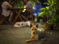 Myat Thu's dogs laze about the restaurant, keeping patrons company.