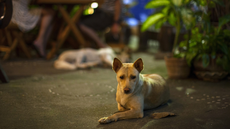Myat Thu's dogs laze about the restaurant, keeping patrons company. (NPR)