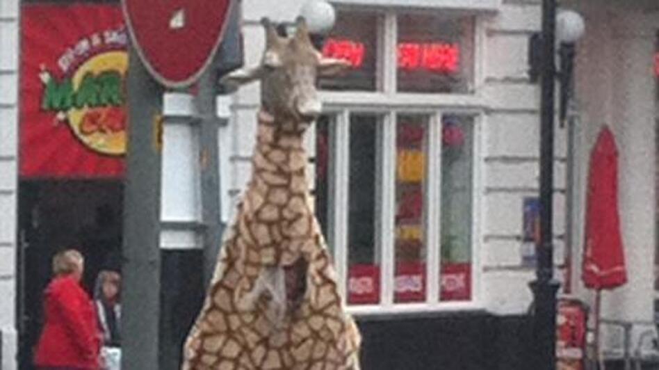 The Good Giraffe, trying to de-mean the streets of Dundee, Scotland. (Armstrong The Good Giraffe Appreciation Society )