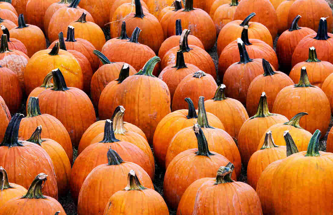 Pumpkins for sale at the Mt. Rogers Pumpkin Patch in the a parking lot in Centreville, Va.