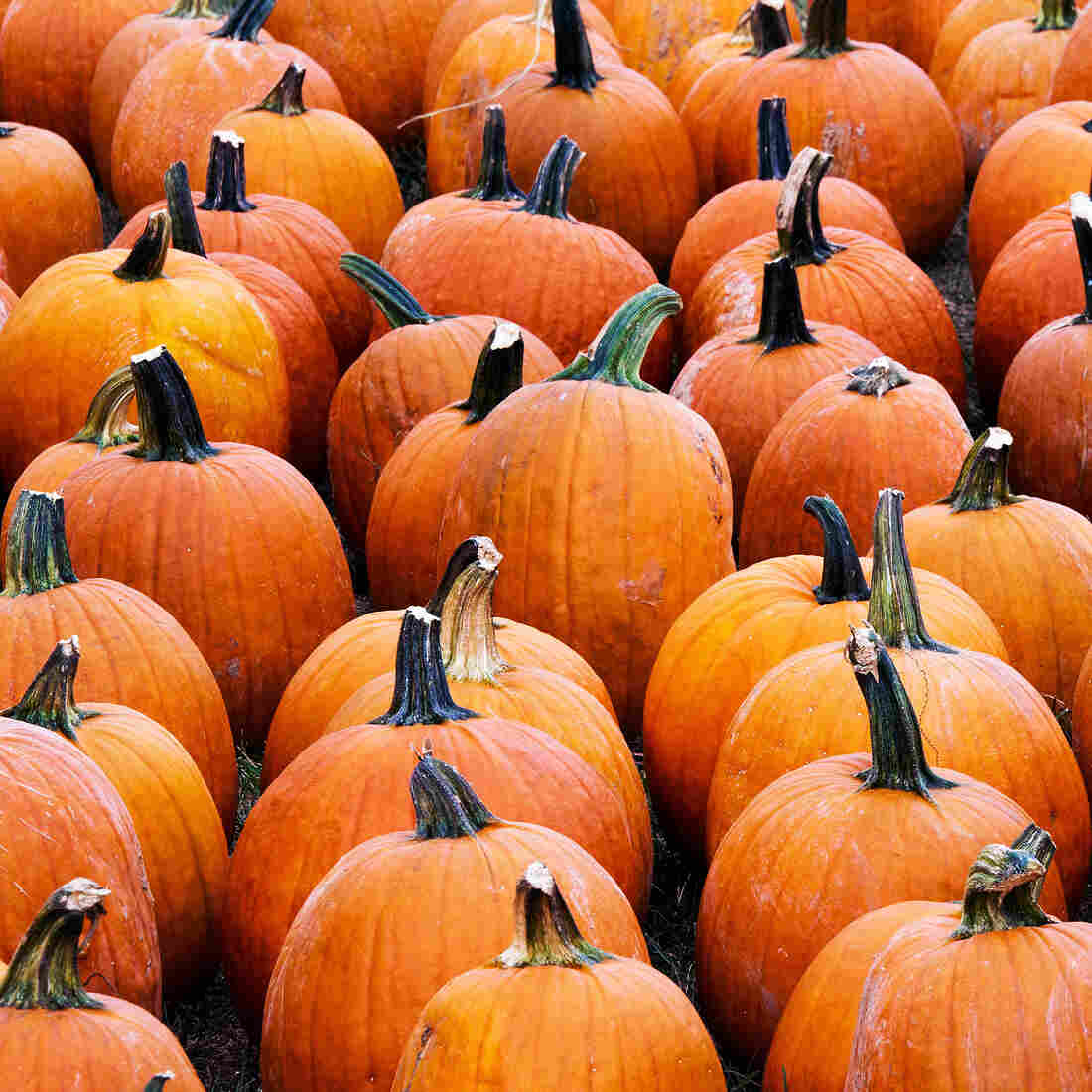 Why Americans Go Crazy For Pumpkin And Pumpkin-Flavored Stuff