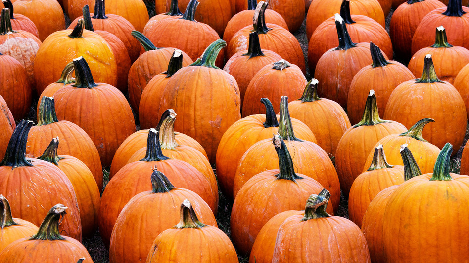 Pumpkins for sale at the Mt. Rogers Pumpkin Patch in the a parking lot in Centreville, Va. (Getty)