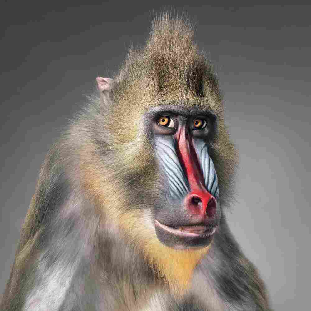 """Name: Congo 