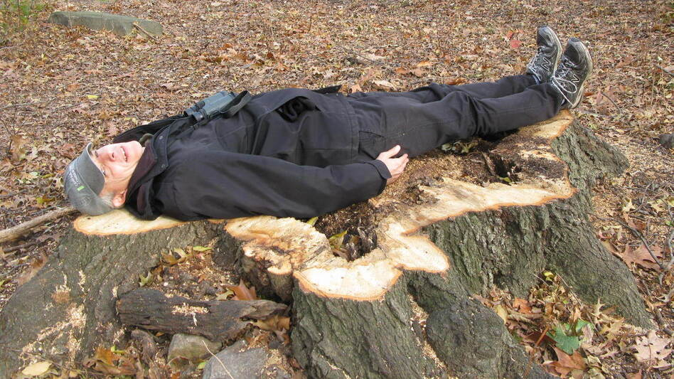 Chaya, who is 6 feet tall, lies down on a massive stump of a Northern Red Oak, the center rotted out. (NPR)