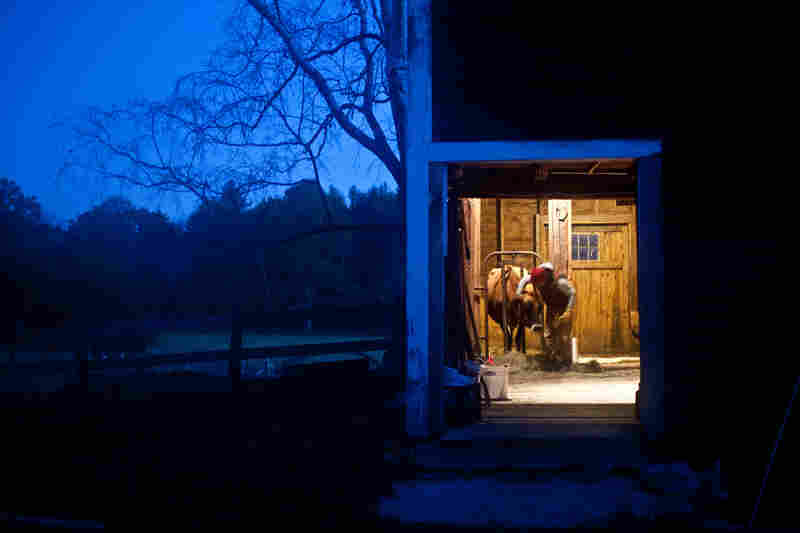 Sarah, a student farmer, gives Patience, a Jersey milk cow, hay during a pre-dawn milking at The Farm School in Athol, Mass. Patience produces about 3 gallons of milk a day.