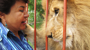 There are some 800 animals at the refuge run by Torres, but Jupiter the lion is her favorite.
