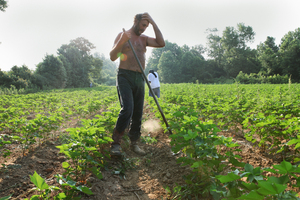 """""""I met Billy D. Harris just before dawn at the country store in Aubrey, Ark., then followed him out to cotton fields that were soon so hot everyone dripped with sweat. Billy pulled off his shirt before continuing to 'chop,' or thin the growing plants."""""""
