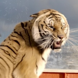 As if being lost at sea isn't daunting for a teenager, Pi's companion on his lifeboat is a Bengal tiger. Life of Pi is based on Yann Martel's 2001 Man Booker Prize-winning novel.