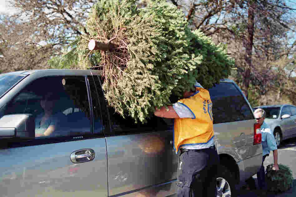 Christmas Tree Shopping, 2011
