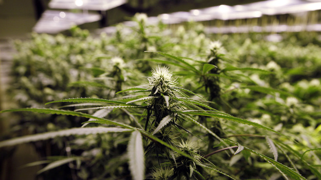 Legalized marijuana in Colorado and Washington state may open the door to a new kind of tourism. (AP)